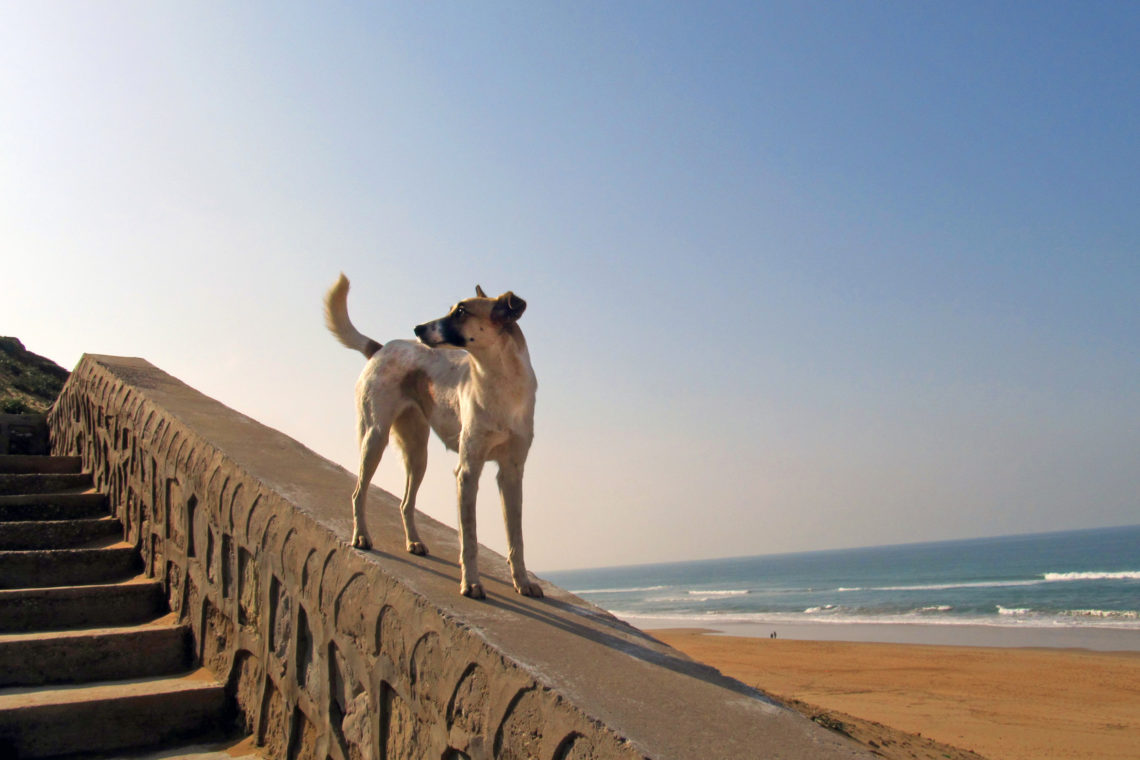 A stray near the beach in Tangier